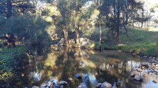 Walking along Tuggeranong Creek, Urambi © Tracey M Benson